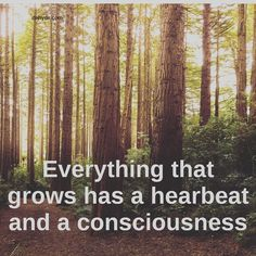 On a journey to finding spiritual truth and inspiring conscious living. All things Spiritual, Consciousness, Energy, Healing and a Mindful Lifestyle Let It Flow, Let It Be, Nature Tree, Hyde, In A Heartbeat, Consciousness, Tao, Spirituality, Healing