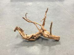 FW13 Redmoor Wood -- driftwood shrimp moss discus manzanita spiderwood spider  #redmoorspiderrootwood