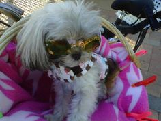Doggles - Optix Sunglasses for Dogs - Copper Paw Lens Dog Treats, Puppies, Pets, Copper, Pictures, Animals, Sunglasses, Animals And Pets, Photos