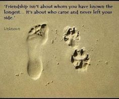 Quotes About Loving Our Pets   Vegan Great Dane: Quotes about Dogs: Sayings, Animals, Dogs, Quotes, Stuff, Pets, Friendship, So True