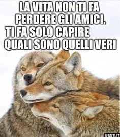 La vita non ti fa perdere gli amici Fact Quotes, Love Quotes, Intelligent Words, Italian Quotes, She Wolf, Male Hands, Manga Love, Tumblr Quotes, Hello Beautiful