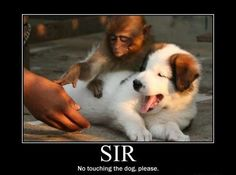 I don't like animals so much, but they can be funny