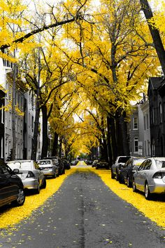 Gorgeous yellow trees. I want this framed and hung up in my room!!