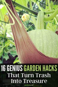 Take a look at these 16 genius garden hacks and turn your trash into treasure! #gardenhacks #gardeninghacks Wine Bottle Planter, Broken Egg, Mini Fairy Garden, Rain Barrel, Gardening Hacks, Terracotta Pots, Milk Jug, Planters, Rain Water Collector