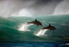 #Dolphins #mamal