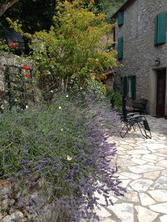 #lavender and butterflies in a summer #garden dance at #casadeisogni #tuscany