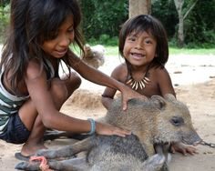 Operation Awa - giving the forest back to one of the most endangered tribes on the planet Native American Songs, Native American Tattoos, American Indian Art, Native American Indians, Rainforest People, Rainforest Tribes, Amazon Rainforest, Asian Photography, Amor