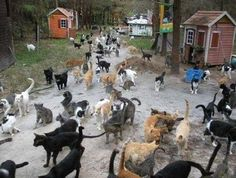 Para os moradores, esses animais há muito tempo representam sorte e fortuna, o que vem em dobro se você os alimenta e cuida deles.