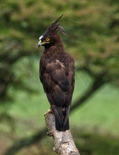 Bird species seen on a Uganda- Rwanda safari.  http://www.primeugandasafaris.com/rwanda-safaris/11-days-uganda-rwanda-safari.html