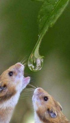 Gotas de lluvia para un sediento!