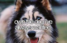I want sooo many! i want another Shih Tzu a Yorkie a Pomeranian a Maltese I want so many! I'm a HUUUUGE dog freak!