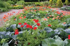 Edible Landscaping. Mix the flowers with the food :)