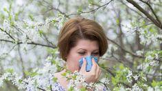 La AAAeIC encarará un estudio de prevalencia de la rinitis alérgica en el país.