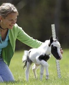 Weighing just 6 pounds and measuring 14 inches high, Einstein may just make it in Guinness Book of World Records. The miniature horse was born Friday, April 22, at a  Miniature Horse Farm in Barnstead, N.H.  I want one!!!!