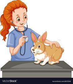 Vet examining little bunny vector image on VectorStock