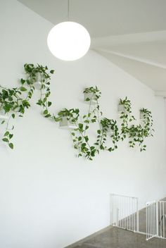 Create nice wall decoration patterns with suspended indoor vine wall planters @istandarddesign