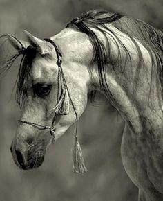 Amazing Photographs of Horses by MyohoDane