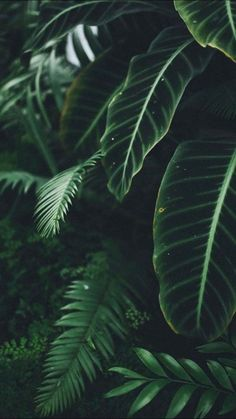 Welcome to the jungle nature aesthetic, dark green aesthetic, aesthetic plants, jungle flowers Estilo Tropical, Plant Aesthetic, Nature Aesthetic, Aesthetic Green, Travel Aesthetic, Plants Are Friends, Slytherin Aesthetic, Welcome To The Jungle, Photo Instagram