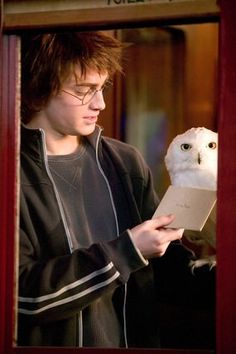Hedwig - Harry Potter Wiki