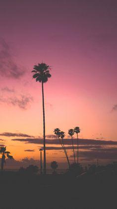 Palm tree sunset phone wallpaper