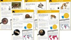 science worksheets for kids activities Indoor Activities For Toddlers, Home Activities, Science For Kids, Science Activities, Science Worksheets, Worksheets For Kids, Too Cool For School, I School, Film France