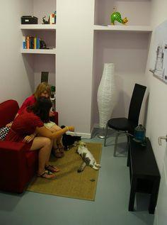 sala de espera felina