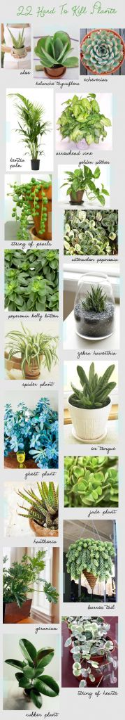 22 Hard To Kill Houseplants - Beautiful Home and Garden