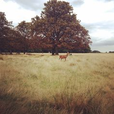 Richmond park, #London // Life is a DIY // blog lifestyle