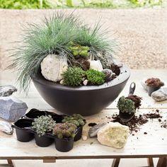 Zo'n stoere minituin kun je heel gemakkelijk zelf maken. #Intratuin #Voorjaar #Bloemen #Planten #Tuin #Tuinieren #Decoratie #Mini #Spring #Flowers #Garden #Gardening #Decoration #Homedeco