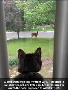 Stopped to watch my cat watching a deer watching a dog