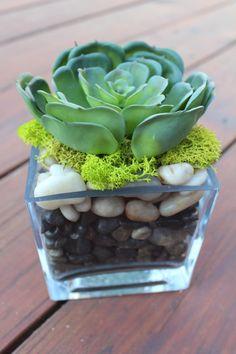 Artificial Succulent in a Square Glass Vase