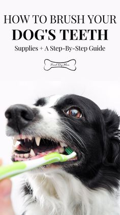How To Brush Your Dog's Teeth: Supplies   a Step-By-Step Guide | Dog Health Care | Dog Care Tips | DIY Dog Grooming | Dog Health Tips, Dog Health Care, Dental Health, Pet Care Tips, Dog Care, Tumors On Dogs, Dog Grooming Tips, Pet Clinic, Dog Dental Care