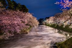 Landscape of cerise coloring Hirosaki park More Japanese pics ... http://jpnpics.com