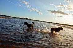 2 Girls, 2 Dogs & 1 World: Photo
