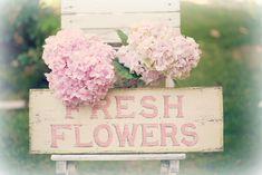 https://flic.kr/p/nNt2C9 | fresh flowers
