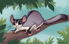 Sugar Glider by kayjkay on DeviantArt Sugar Glider Cage, Sugar Gliders, Australian Nursery, Sugar Bears, Opossum, Animal Pictures, Illustration Art, Illustrations, Digital Art