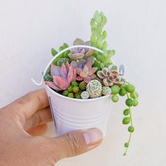 Mini bucket filled with tiny succulents.