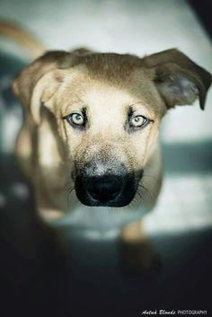 Tu sol - antua blonde photography -  fotógrafo solidario - barcelona - animal - fotos - reportajes - animal de compañía - maresme - cat - gat - gato - dog - gos - perro