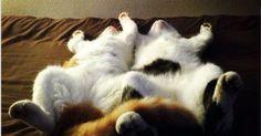 瞳に吸い込まれそう……世界でもっとも美しい瞳を持つネコ 17枚|ペットフィルム -犬・猫・ペットの画像・動画まとめ petfilm.biz