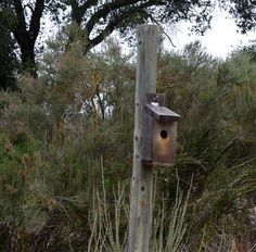 Birdhouse DIY tutorial w placement instructions by species