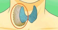 Problémy so štítnou žľazu sú v súčasnosti pomerne bežné. Dokonca, veľa ľudí má nejaké jej ochorenie a ani o tom netušia. Vyskytnú sa občas aj ta
