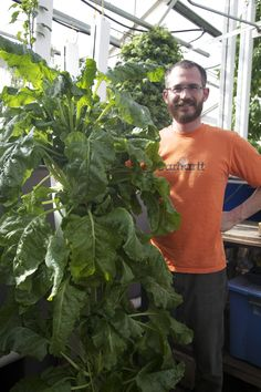 Look at all this Swiss Chard! #vertical #aquaponics #hydroponics    http://brightagrotech.com/