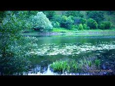Релакс. Звуки вечернего леса,Слушать перед сном. // Sounds of Nature - YouTube Blade Runner 2049, Meditation Music, Amazing Nature, Travel, Outdoor, Youtube, Musica, Singing, Outdoors