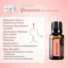 Enhance your daily skincare routine by adding a drop of moisturizing geranium essential oil. Doterra Geranium, Geranium Oil, Geranium Essential Oil, What Are Essential Oils, Essential Oil Uses, Hermes Perfume, Parts Of A Plant, Pure Oils, Doterra Essential Oils