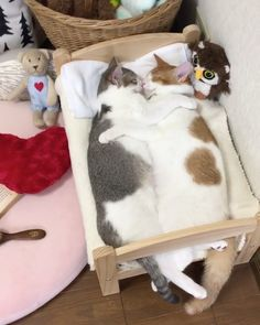 "205.9k Likes, 3,927 Comments - Cats of Instagram (@cats_of_instagram) on Instagram: ""From @riepoyonn: ""ぎゅっ♡ Sweet dreams"" #catsofinstagram"""