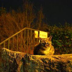 #cat #onomichi #hiroshima  #japan #catlovers  #instagood  #japantravel #happy #fun #look #photography #portrait #instajapan #instadaily #ポートレート #japantrip #natgeo #amazing #photo_shorttrip #solo #yolo  #awesome #cool  #wonderful_places