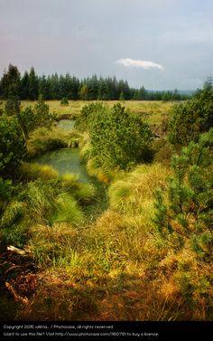 Foto 'georgenfelder hochmoor' von 'willma...'
