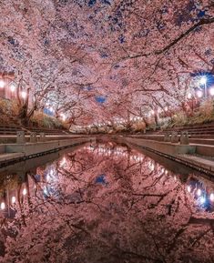 Cherry blossom are on huge rate in japanYou can find Cherry blossoms and more on our website.Cherry blossom are on huge rate in japan Cherry Blossom Wallpaper, Cherry Blossom Background, Beautiful Places, Beautiful Pictures, Wonderful Places, Cherry Blossom Japan, Aesthetic Japan, Visit Japan, Blossom Trees