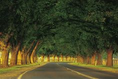 Avenue of Honour, Bacchus Marsh - I love this welcoming stretch of road.  Every tree has a plaque with the name of a fallen Australian soldier.