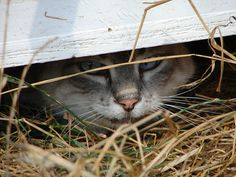 All living things seek shelter from the elements. Safe, cozy, comfortable:home.